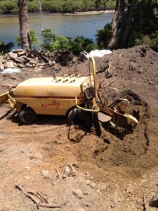 Stump Grinding Solutions 6
