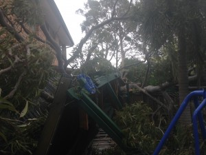 What happens if a tree falls on my property during a storm? 5