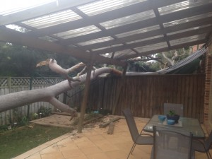 What happens if a tree falls on my property during a storm? 2
