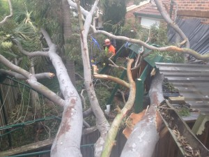 What happens if a tree falls on my property during a storm? 6