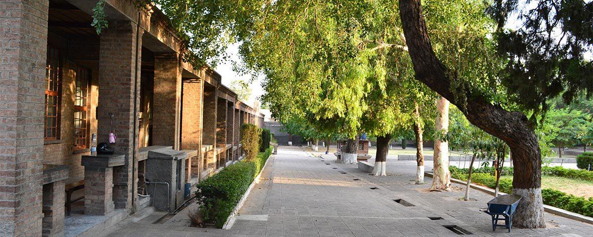 Managing School Trees